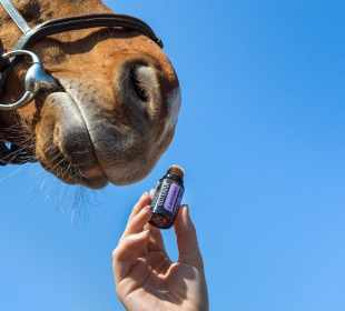 CBD For Your Horses